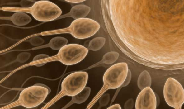 can abuse of vicodin cause male infertility.